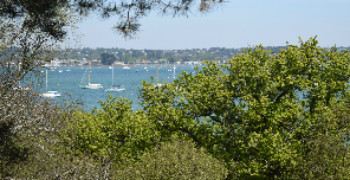 Brownsea_pine_vista