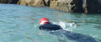 Swim around Asparagus Island