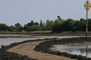 Northey Island castaway