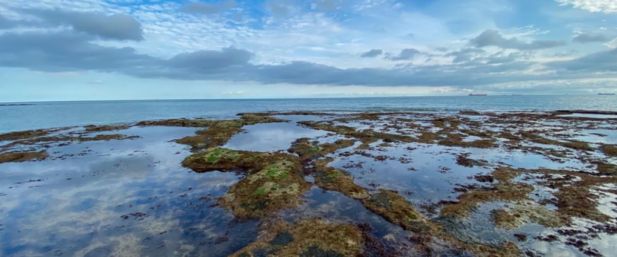 Rock pooling Isle of Wight