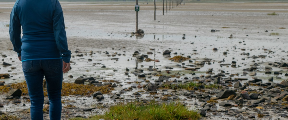 Holy Island walking route